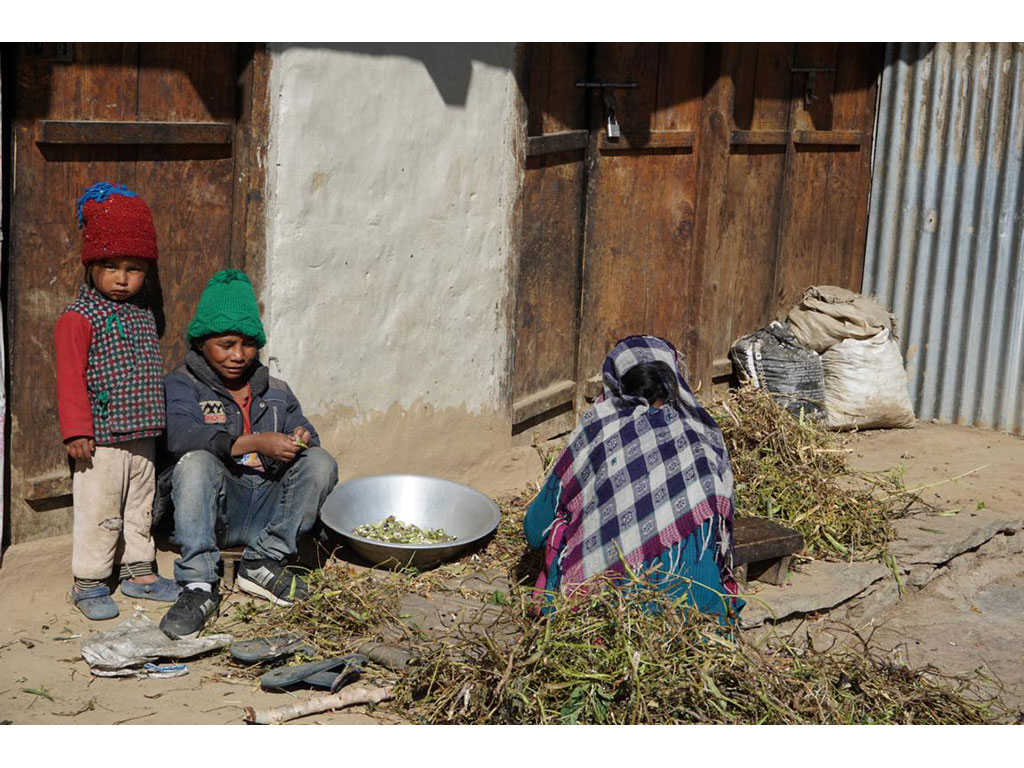 Peas are being removed from pods by three kids in Simikot, Nepal.