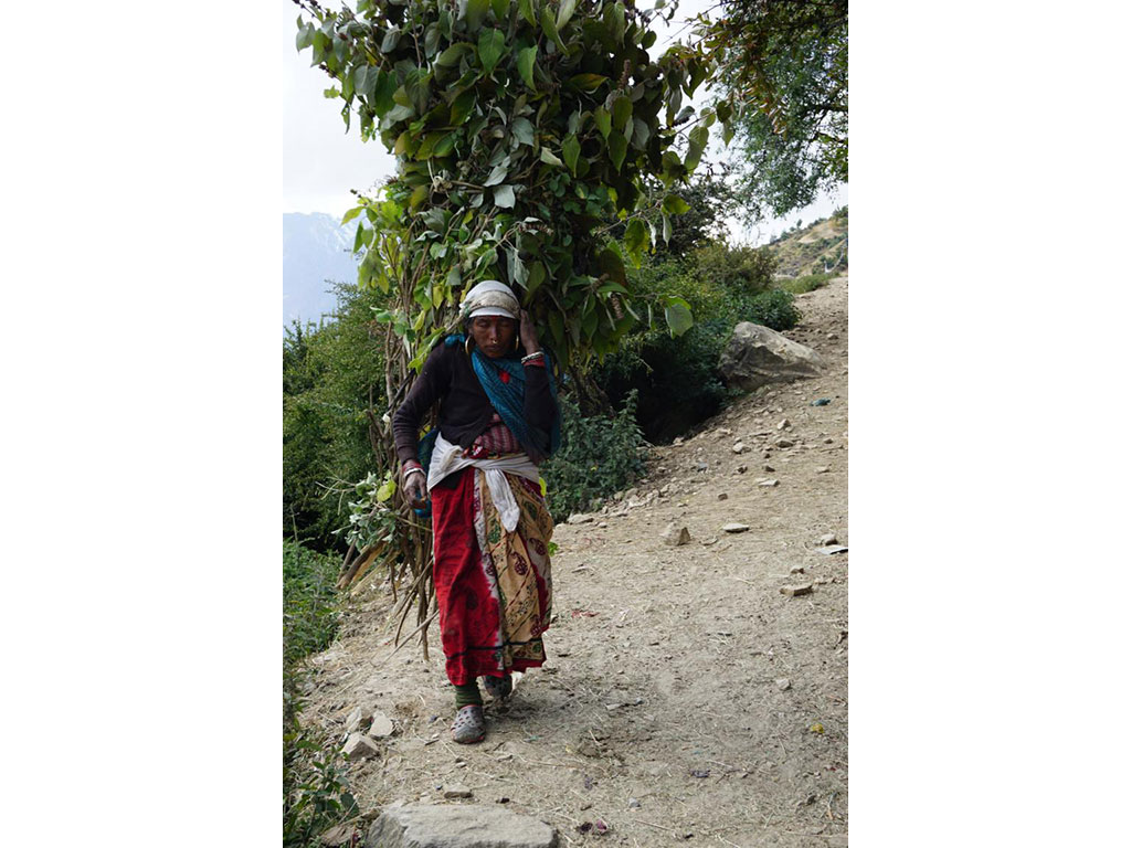 An older woman carrying branches on her back in the Himalayas in Nepal.